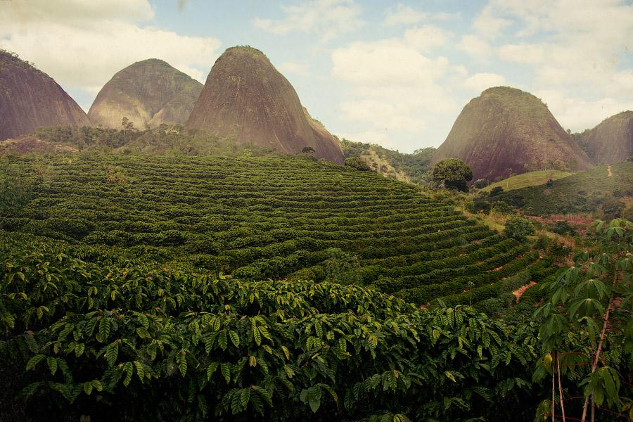 Регионы производства кофе: Бразилия